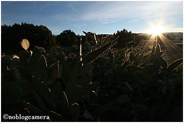サボテンと太陽