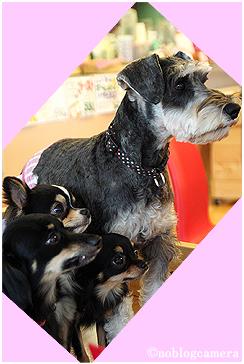 仲良し4犬組