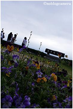 崎野自然公園の花